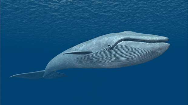 نهنگ Whale