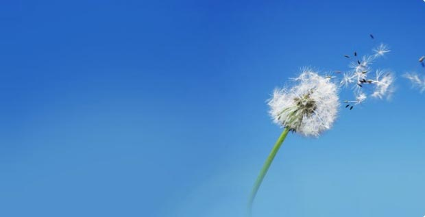 باد wind