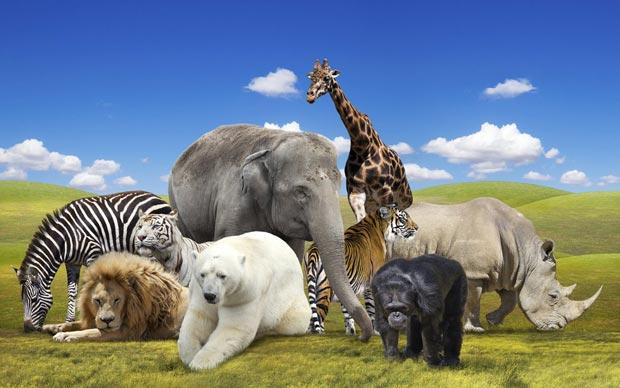 جانور animals