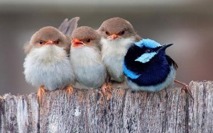 پرنده در خواب