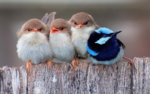 دیدن پرنده در خواب