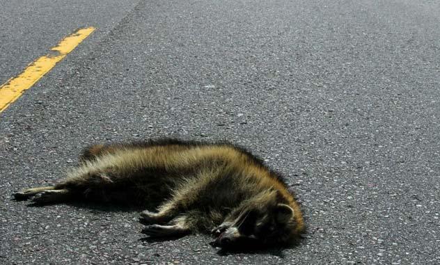 تعبیر دیدن جسد حیوانات مرده