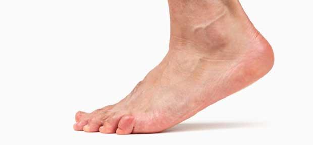 پاشنه heel