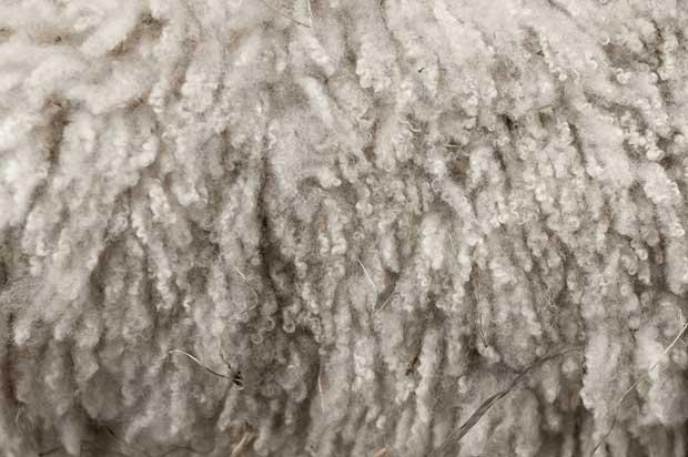 پشم wool