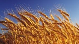 خرمن Harvest
