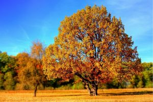 تعبیر خزان (پاییز)