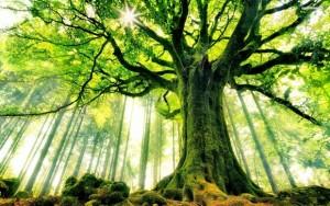 درختtree