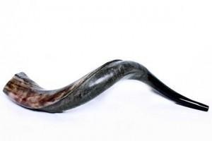 شاخ horn