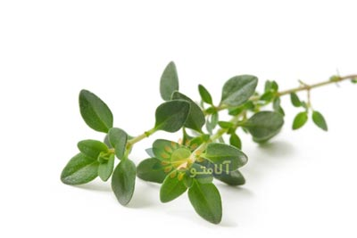 عکس گیاه آویشن