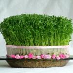 مدل سبزه هفت سین