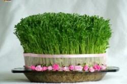 زیباترین مدلهای سبزه هفت سین مخصوص نوروز