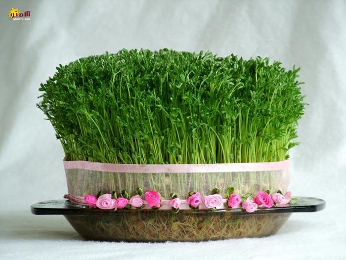 زیباترین مدل های سبزه هفت سین مخصوص نوروز 1391