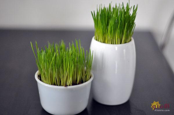 مدل ساده سبزه هفت سین