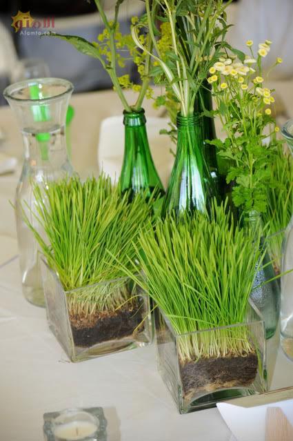 ایده زیبا سبزه سفره هفت سین