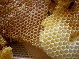 کندو Honeycomb