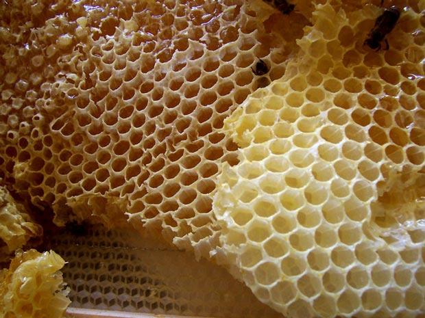 مزایای عسل برای بدن