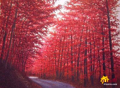 جنگل سرخ