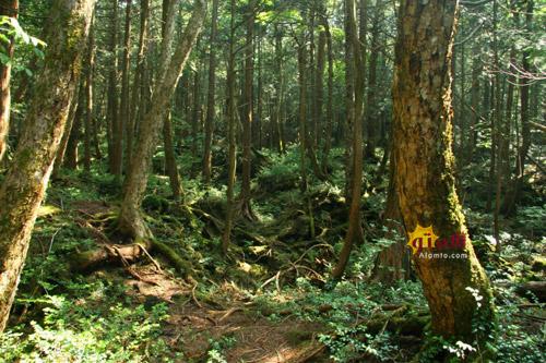 جنگل دریای درختان