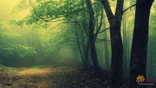 جنگل Hoia-Baciu