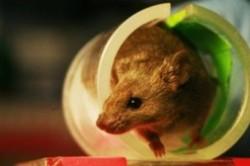 موش ها در نقش اَوَتار پزشکی انسان ها