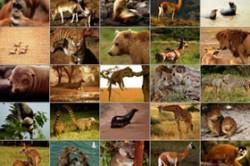 پستانداران چه نوع جانورانی هستند؟