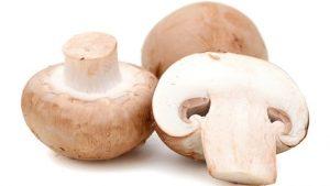 قارچ mushroom