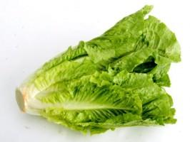 کاهو Lettuce