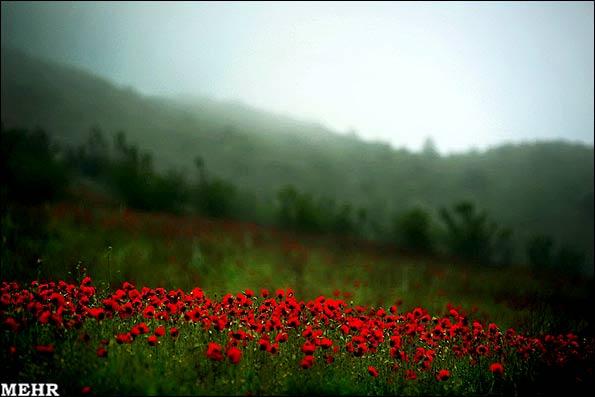 عکس جنگل های ارسباران