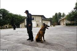 عکس های دیدنی از مرکز آموزش سگ های موادیاب ناجا