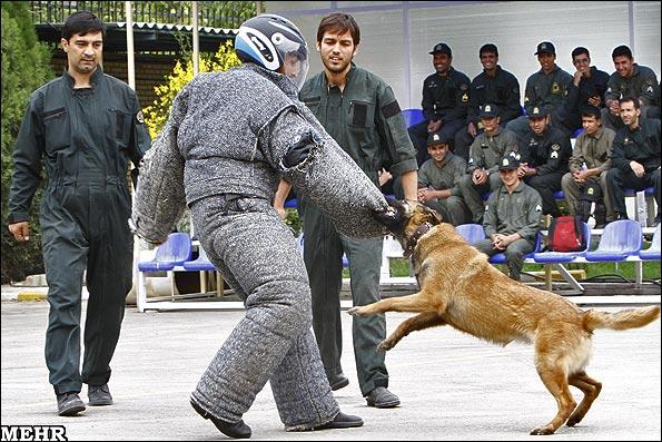 عکس سگ شکاري