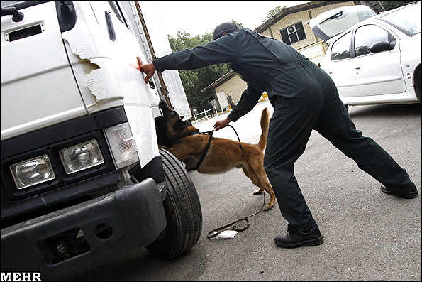 عکس سگ موادیاب