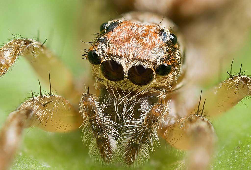همه چیز درباره عنکبوت ها
