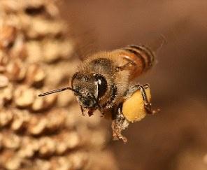 دردناک ترین نیش حشرات