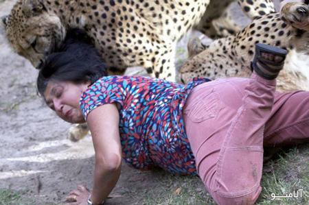 حمله یوزپلنگ به آدم