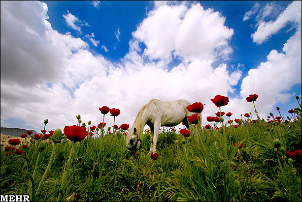 عکس منظره گل زیبا