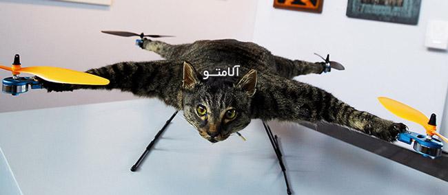 گربه پرنده