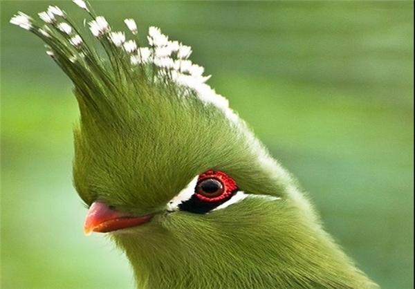 چسب پرنده 2560x1440 Обои зимородок, птица, клюв