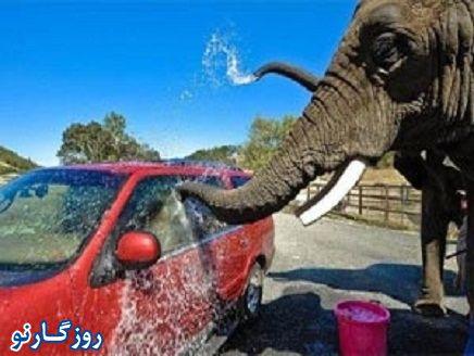 فیل های ماشین شور