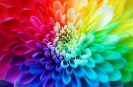 رنگهای زنانه و مردانه