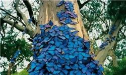 زیباترین و معروفترین پروانه های جهان + عکس