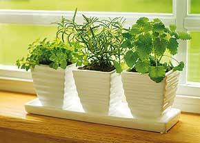 مراقبت و نگهداری از گیاهان در فصل سرما