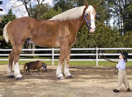 ملاقات بلندترین و کوتاه ترین اسب