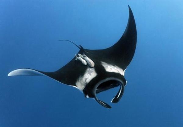 دنیای زیر آب
