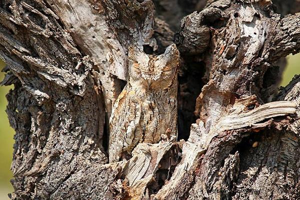 عکس جغد owl
