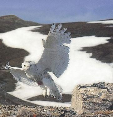 خطرناک ترین پرندگان دنیا