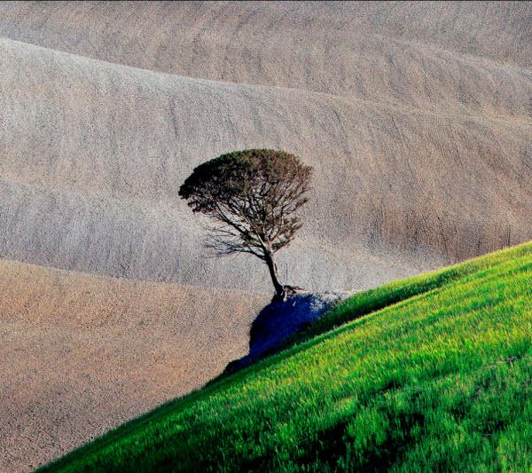 تک درخت، عکسی از Marek Andrzejewski از لهستان