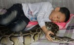 زندگی کردن 13 سال کودک چینی با مار پیتون / عکس