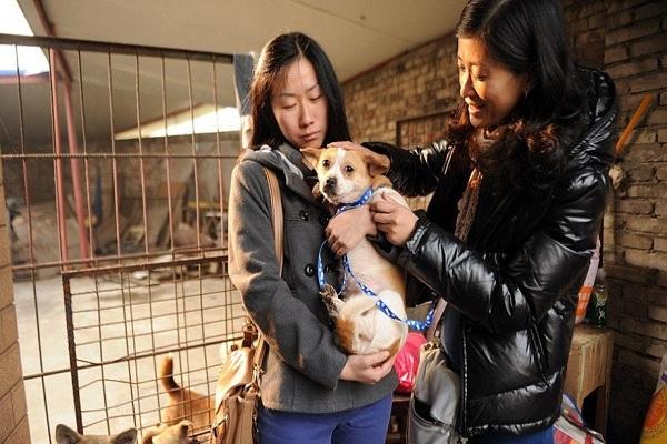 زن چینی که با پرورش سگ در خانه خود تجارت می کند + عکس