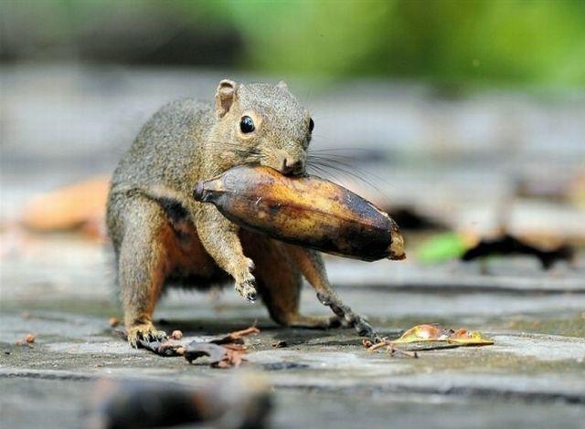 غذا خوردن حیوانات + عکس
