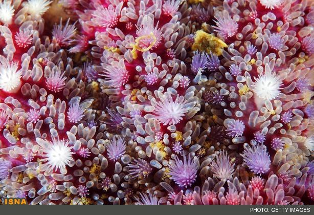 عکس های زیبا از ستاره دریایی